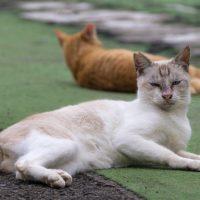 渋谷区の猫