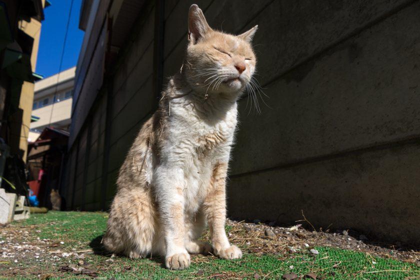 飯能市の猫