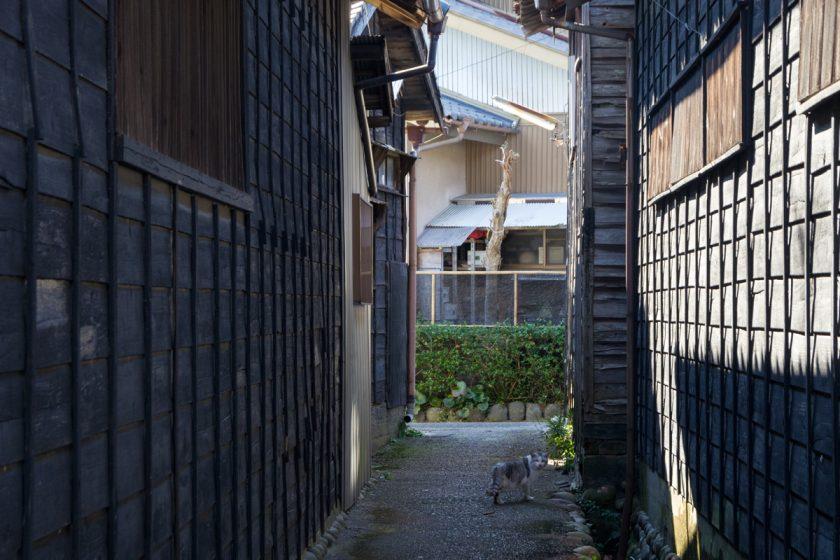 島田市の猫