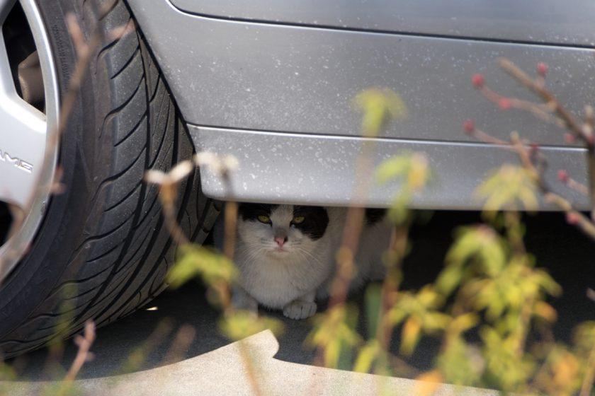稲城市の猫