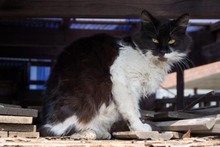 瑞穂町の猫