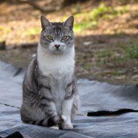 東大和市の猫