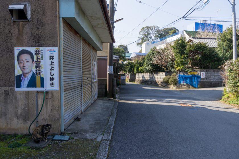 小田原市の猫