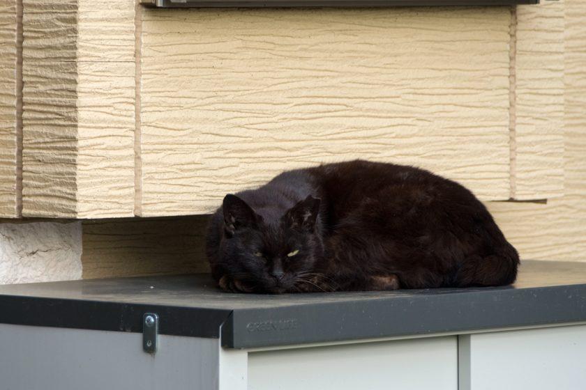 国分寺市の猫