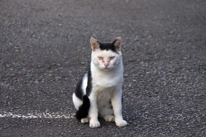 川崎市の猫