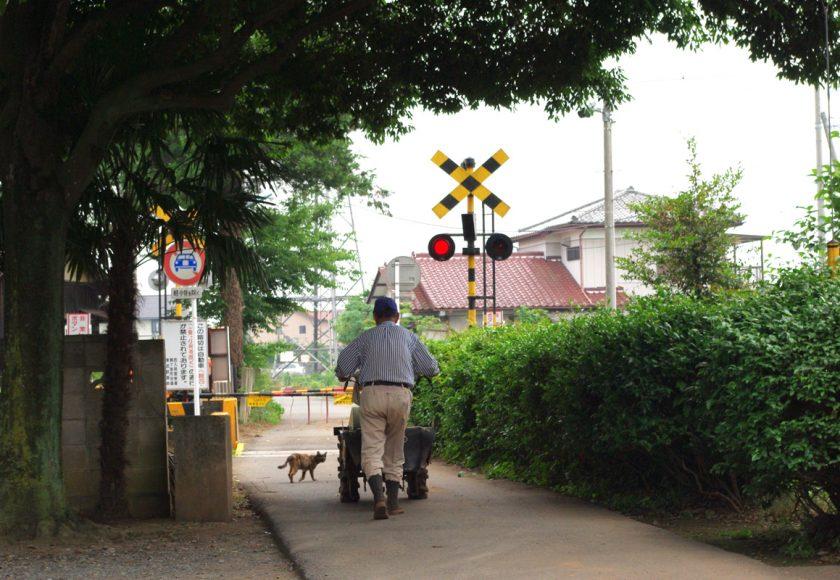 鶴ヶ島市の猫