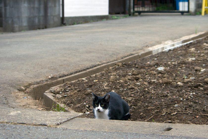 あきる野市の猫