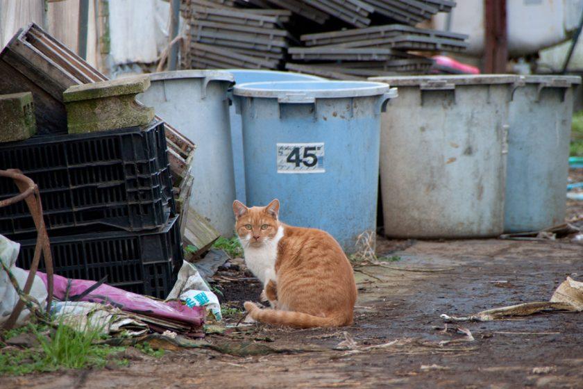 日の出町の猫