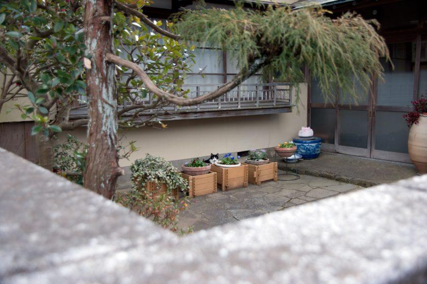 成田市の猫