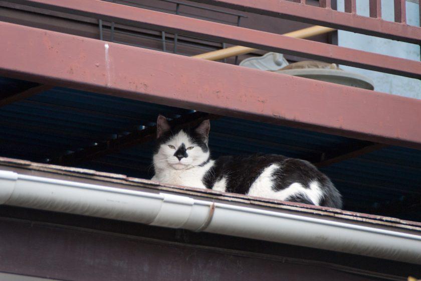 2012年2月17日・東京都立川市曙町・その2