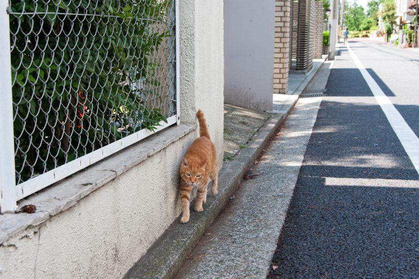 武蔵野市の猫