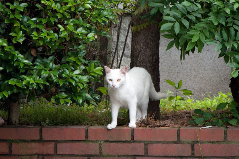 羽村市の猫