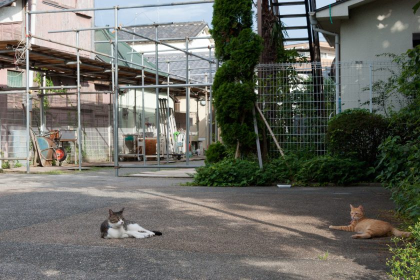 浦安市の猫