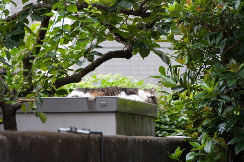 世田谷区の猫
