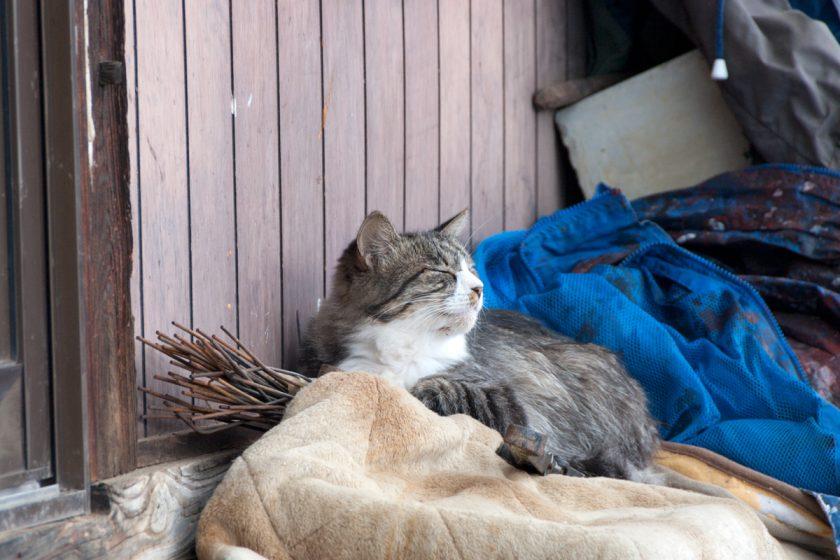 下諏訪町の猫