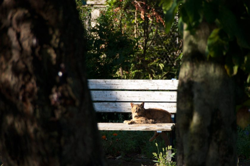福生市の猫