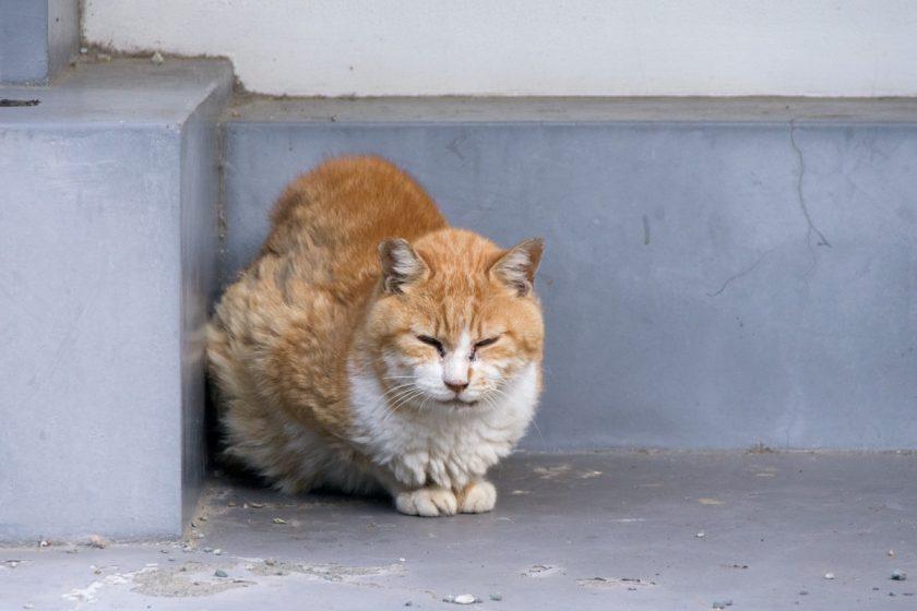 鎌倉市の猫