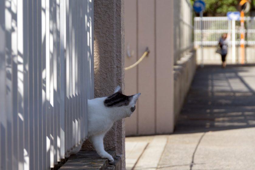 藤沢市の猫