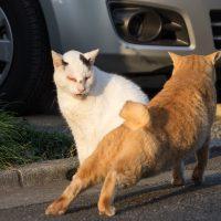 東村山市の猫