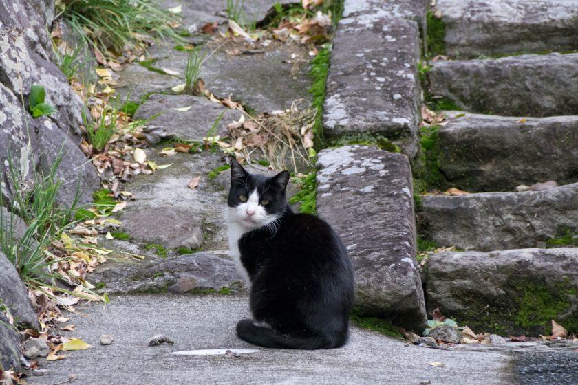沼津市の猫