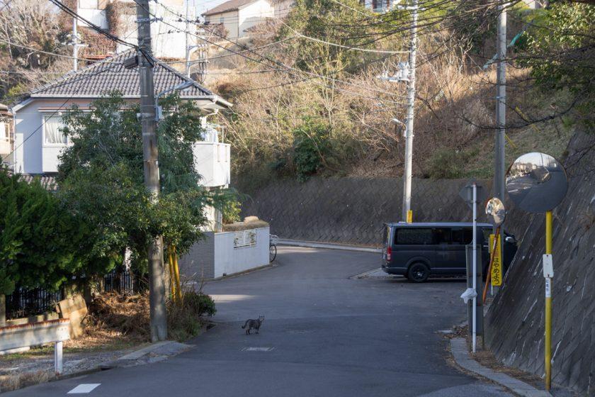 船橋市の猫