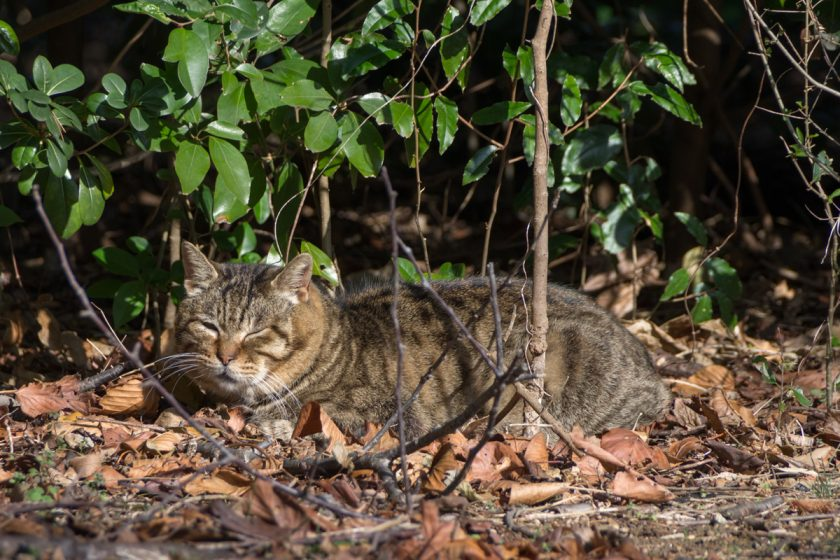江戸川区の猫