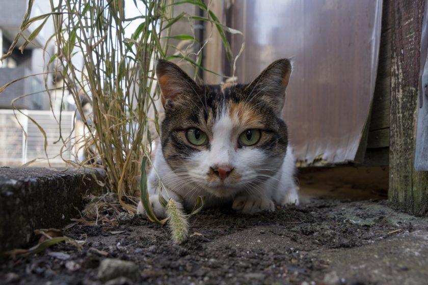 練馬区の猫
