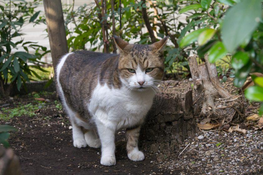 中央区の猫