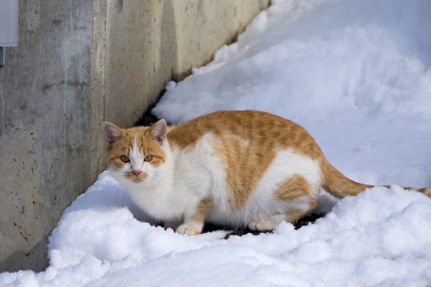 飯山市の猫