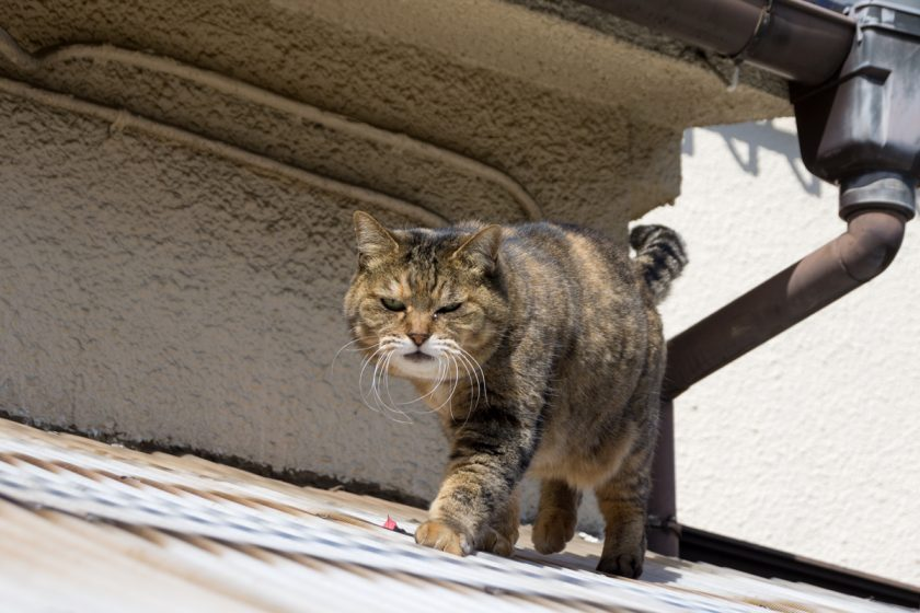 豊島区の猫