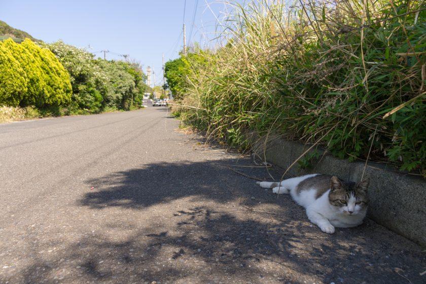 横須賀市の猫