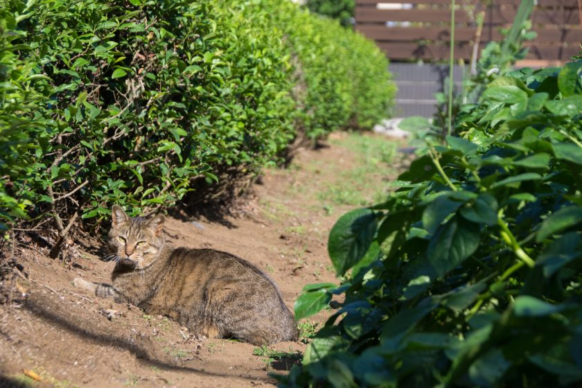武蔵村山市の猫