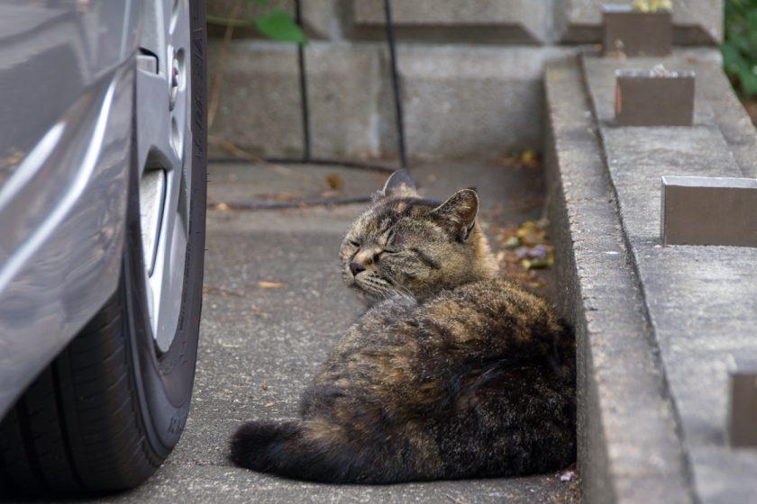 上野原市の猫