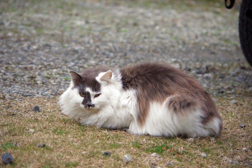 君津市の猫