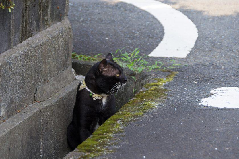 座間市の猫