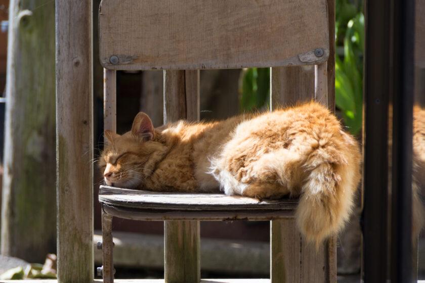 市原市の猫