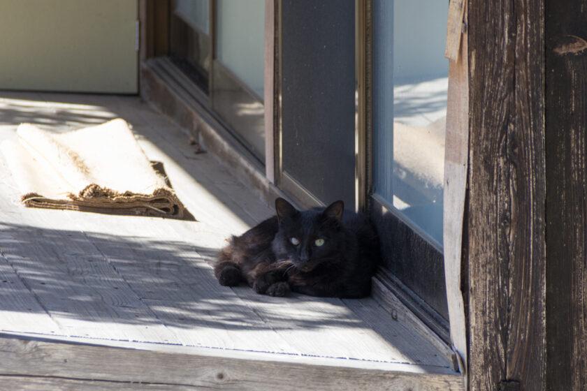 大多喜町の猫