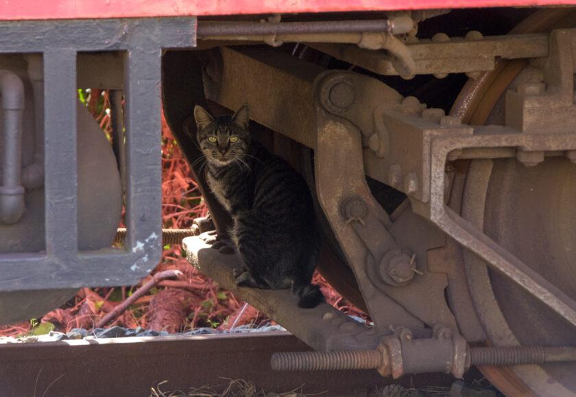 銚子市の猫