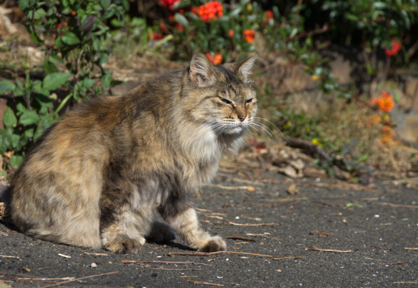 横浜市の猫
