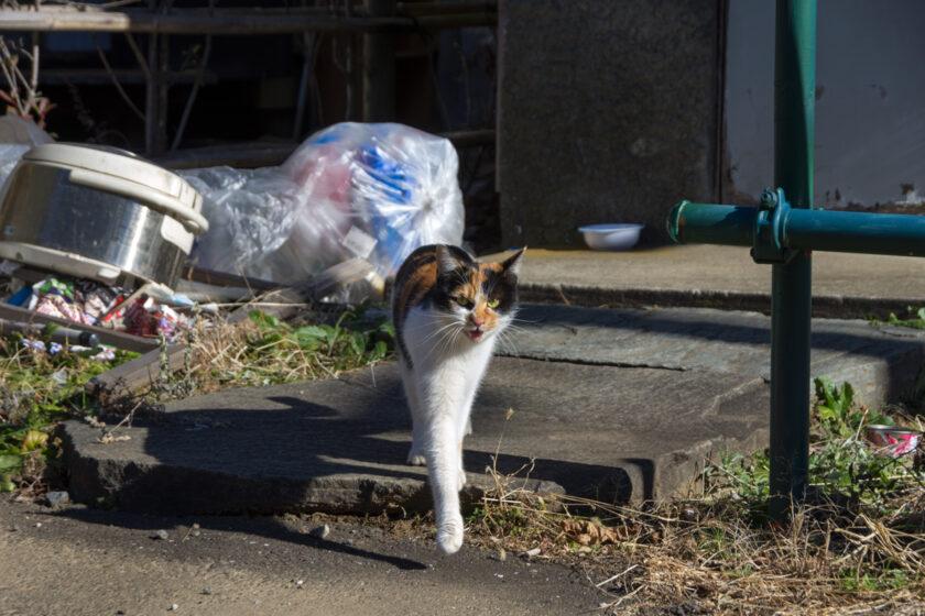 所沢市の猫