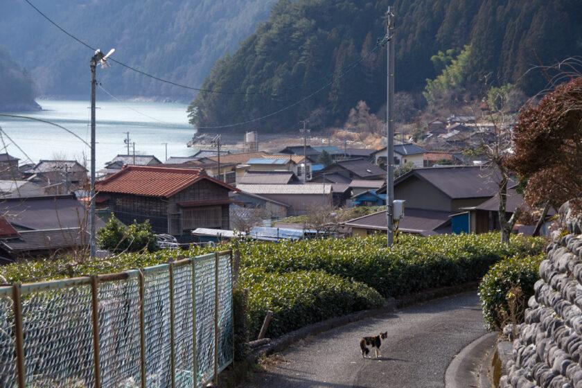 静岡市の猫