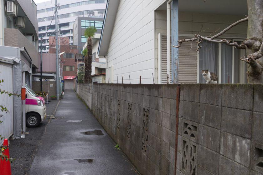 立川市の猫