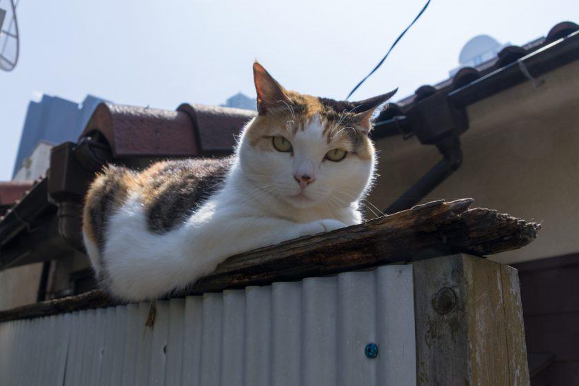 新宿区の猫