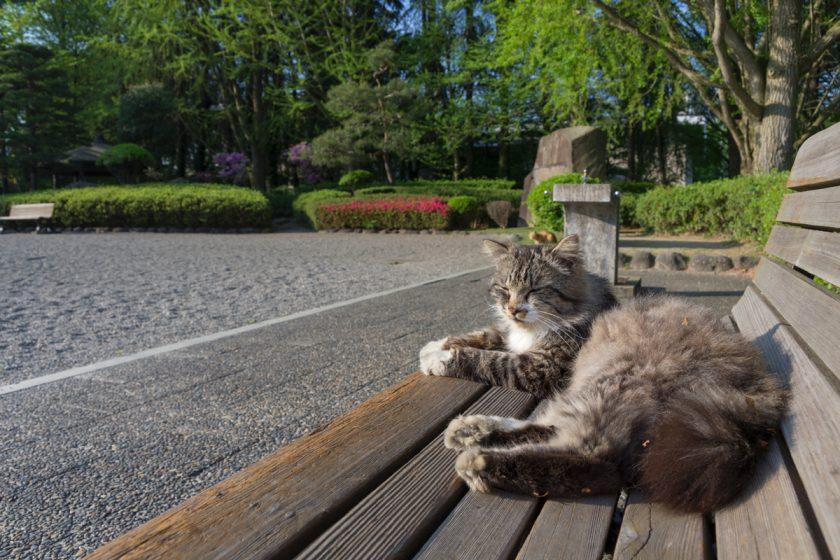 山形市の猫