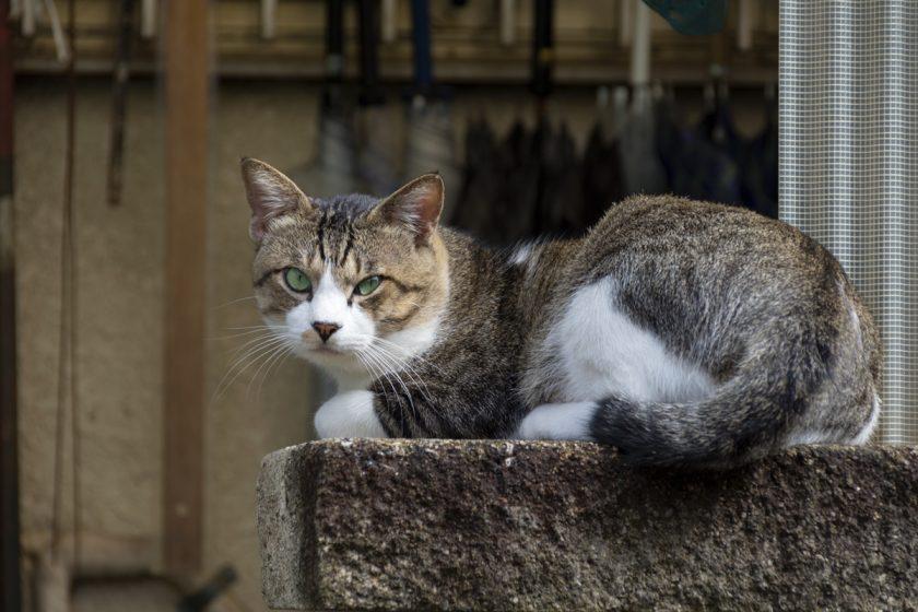 和光市の猫
