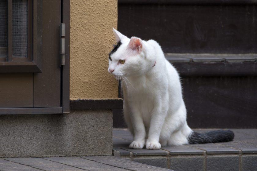 西東京市の猫