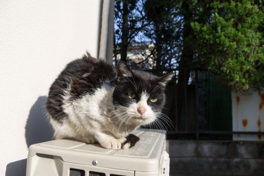 志木市の猫