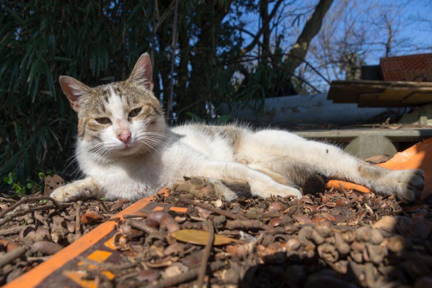 三浦市の猫
