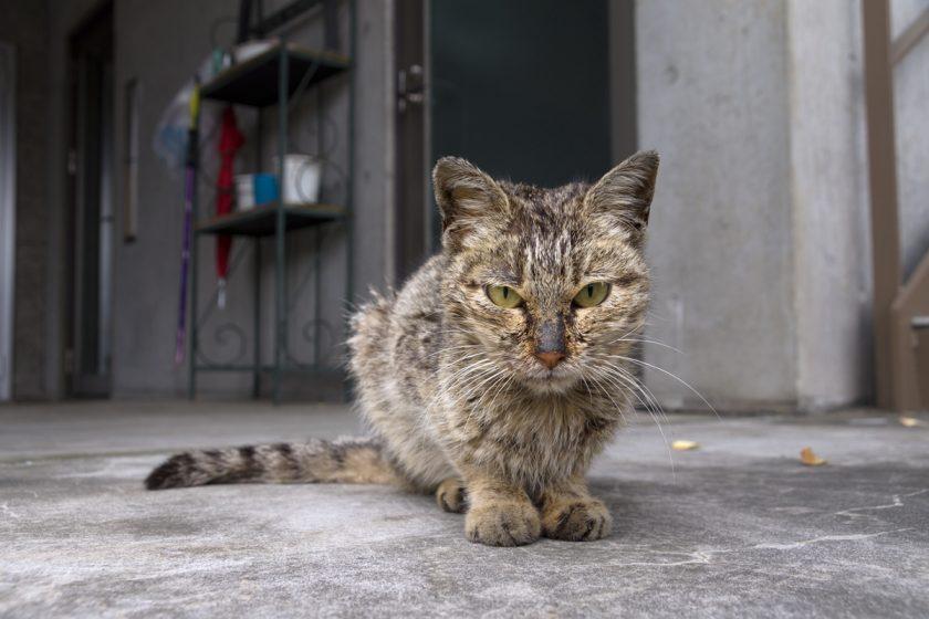 宇都宮市の猫
