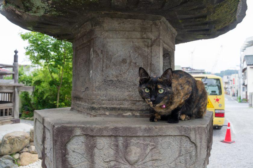 秩父市の猫
